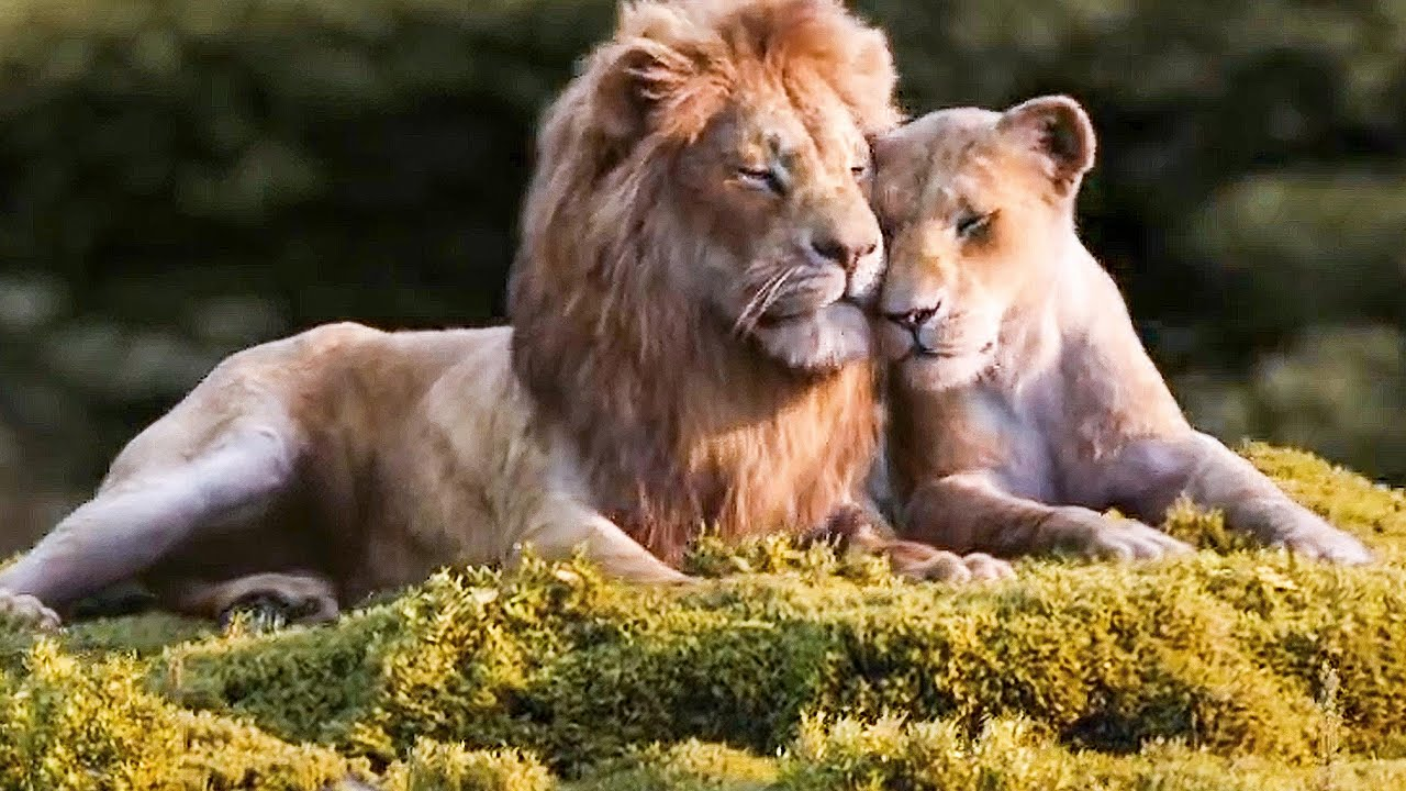 Lion King 2019: Can You Feel the Love Tonight?